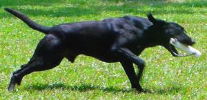 Bonin Dog Training Center
